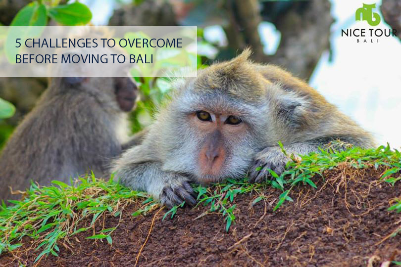 5 Challenges To Overcome Before Moving To Bali