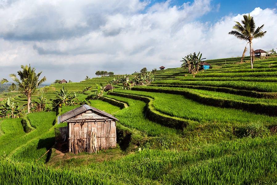 Bali Day Tour | Jatiluwih Rice Hills & Temples