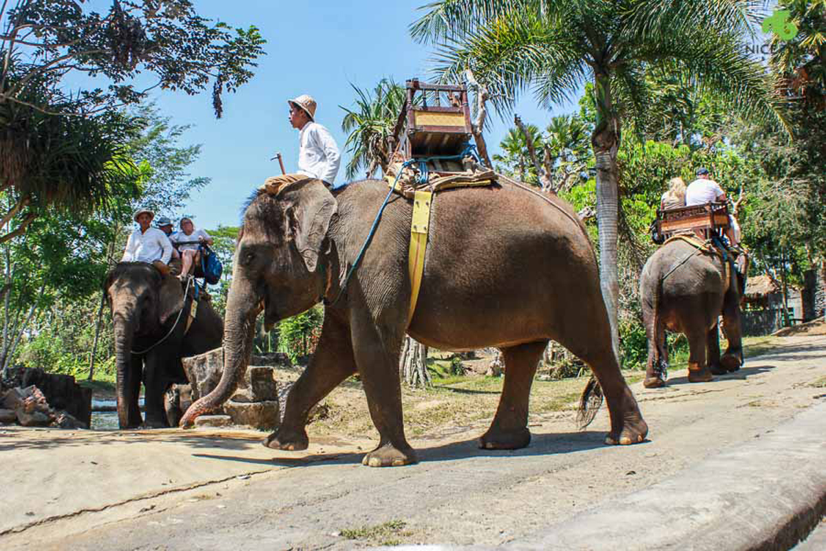 Full Day Bali Elephant Ride