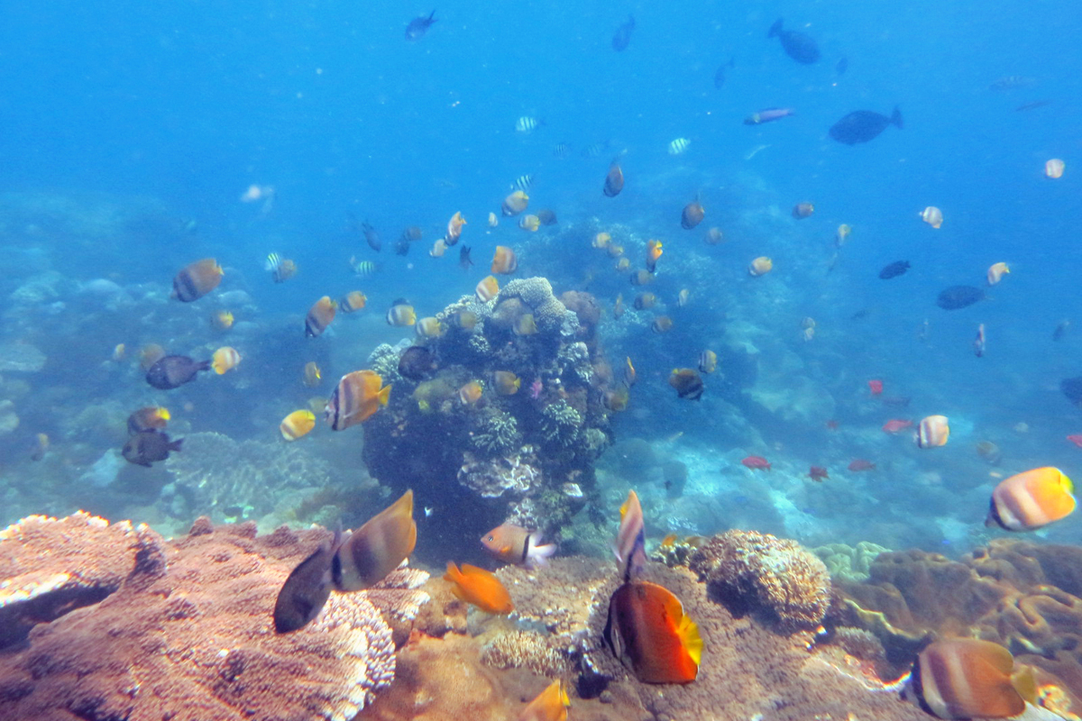Mangrove Point Snorkeling