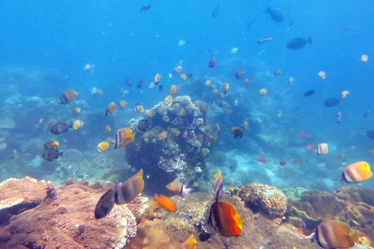 Mangrove Point Snorkeling