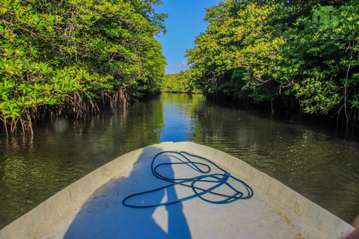 Mangrove Tour at Lembongan