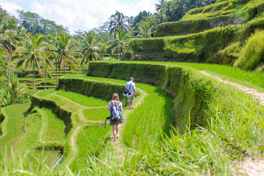 Tegalalang Rice Field