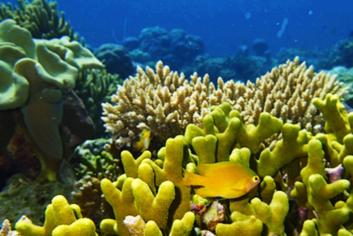 Mangrove Point Reef View