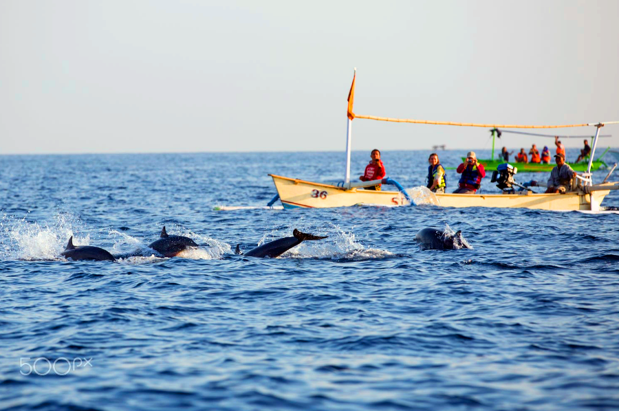 Dolphin Tour Bali | Tours+Hotel+Meals | ALL inclusive