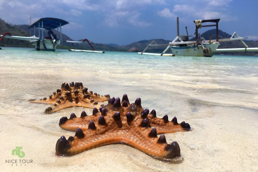 Starfish at Gili Bedis Lombok