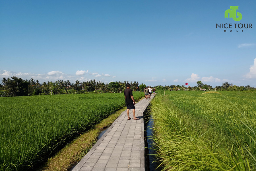 finish point Beji Guwang Hidden canyon with a lot of paddy field